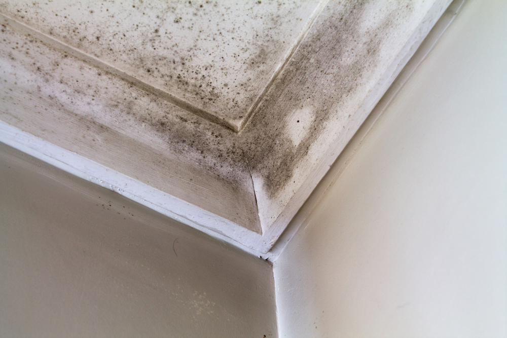 interior molding with mold damage
